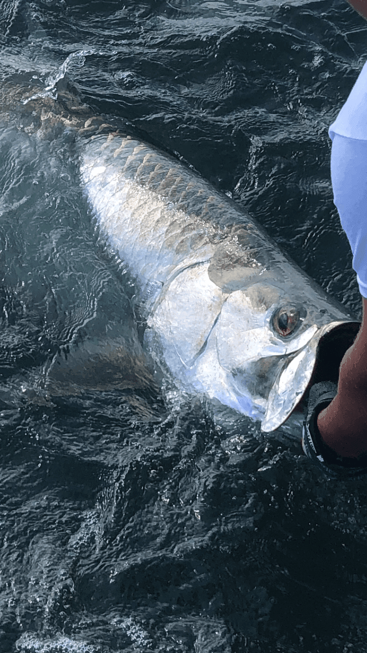 A picture of Tarpon Fishing Charters with Legends of the Lower Marsh